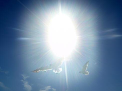 seagulls-lb3